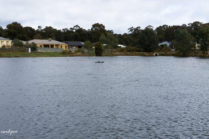Forest Lake Kangaroo flat bird island