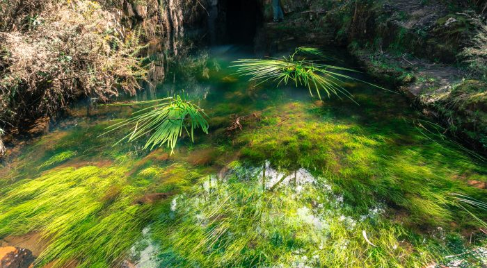 Lerderderg River tunnel growth