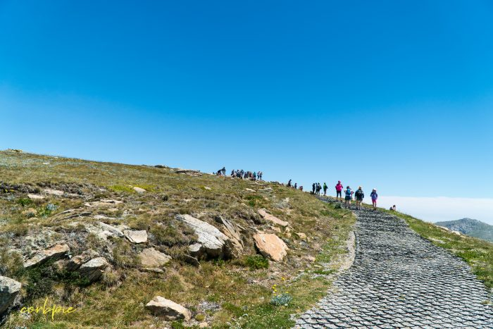 crowded peak Mt Kosciuszko Summer 2019