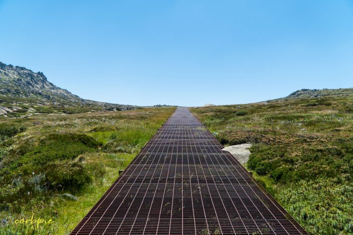 the path Mt Kosciuszko Summer 2019